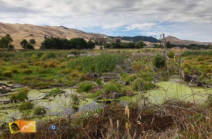 Wetlands near Napier.