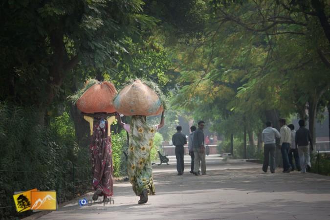 women carrying grass cuttings