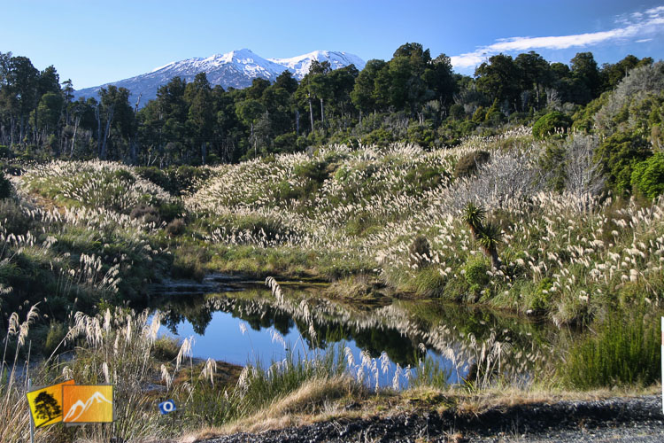 Mount Ruapehu in front of water and pampus grass.