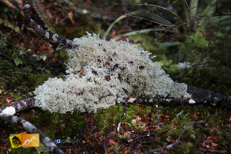 Close-up of forest moss and lichen.