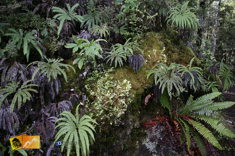 Native forest ferns.