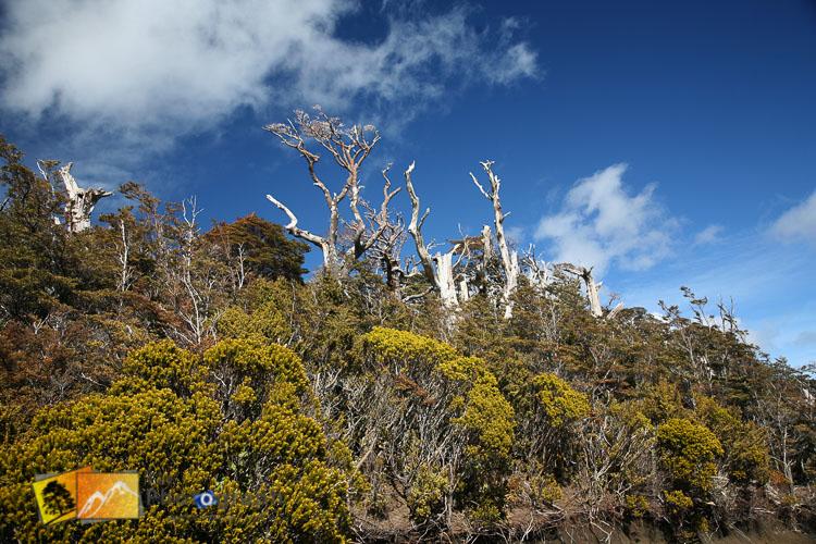New Zealand native bush.