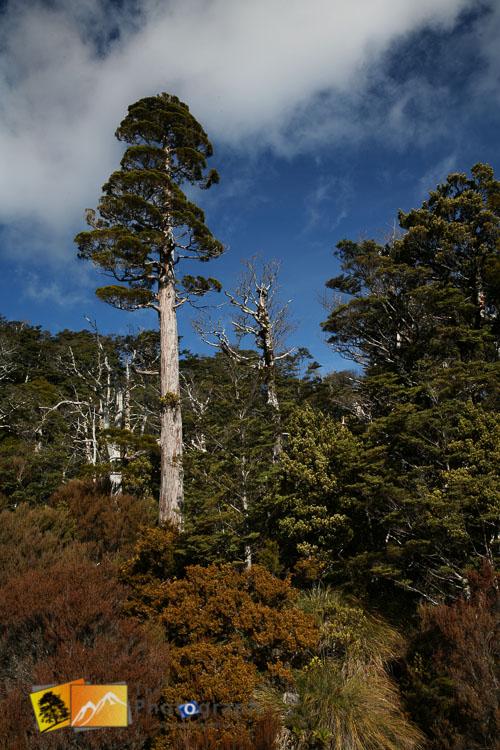 Natural bush on mount Ruapehu.