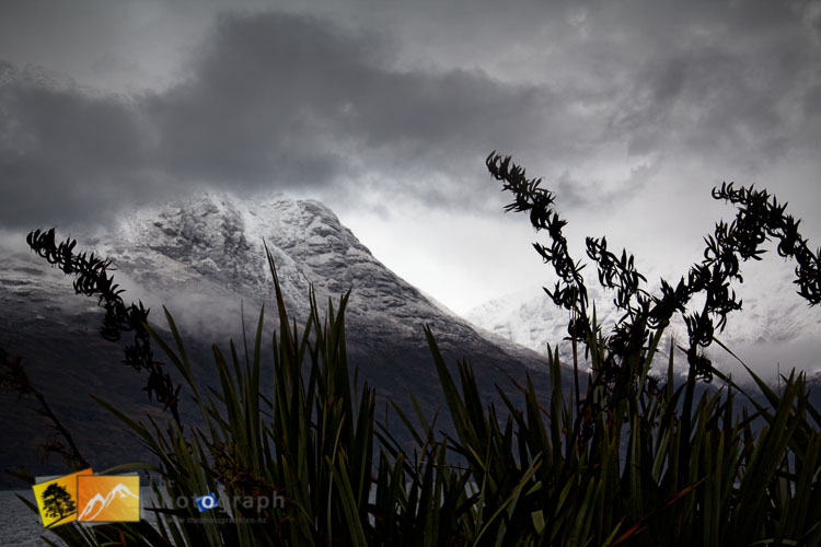 Flax and mountain winter scene at Queenstown.