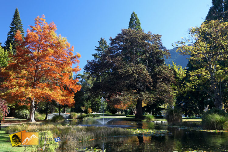 Sunny day at Queenstown botanical gardens.