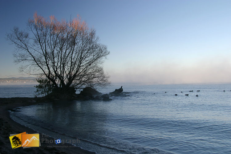 Birds in the morning mist at Taupo.