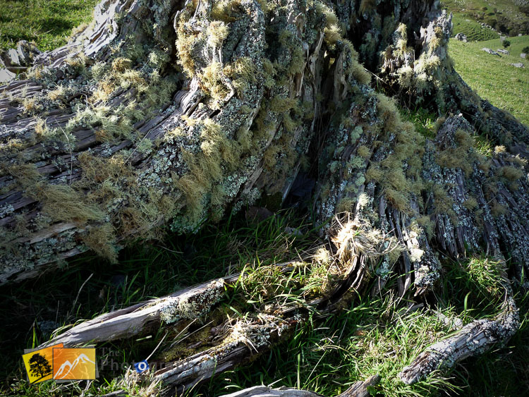 Old tree stump covered in moss.